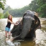 Elephant Bathing, Chiang Mai - Thailand