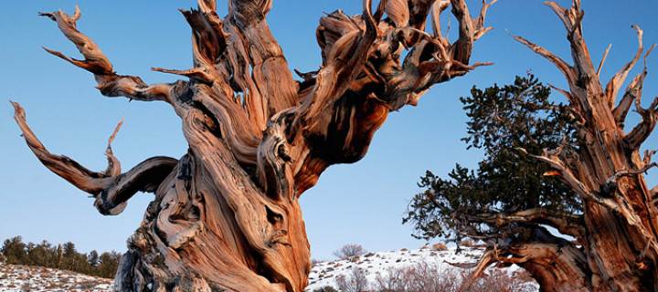 Ancient Bristlecone Pine Forest, United States
