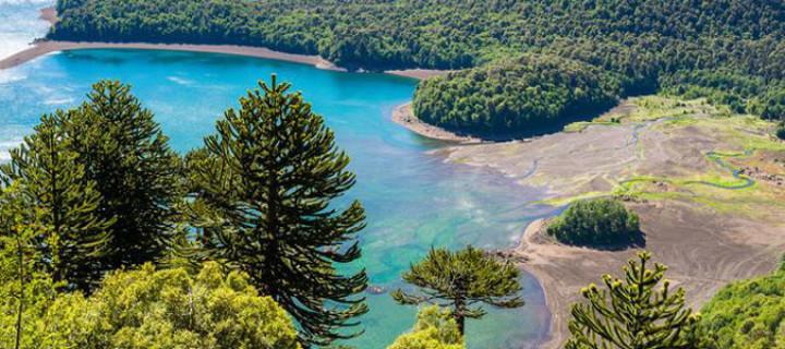 Araucaria Forest, Chile