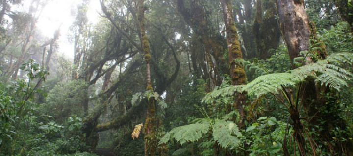 Braulio Carrillo National Park, Costa Rica