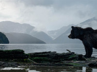 Great Bear Rainforest, Canada