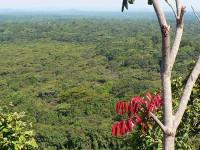 Kakamega Forest, Kenya